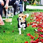 Pets in Your Wedding? The Pawning Planners Love Diversity